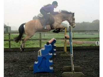 Irish Sports Pony, Dun, Gelding, 18 years, 13.2 hands. A true gentleman in every way