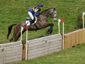 EXCEPTIONAL YOUNG EVENT HORSE