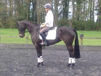 GABRIELLE- ATTRACTIVE SMALL EVENT HORSE