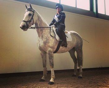 BEAUTIFUL 15.2HH IRISH SPORTS HORSE
