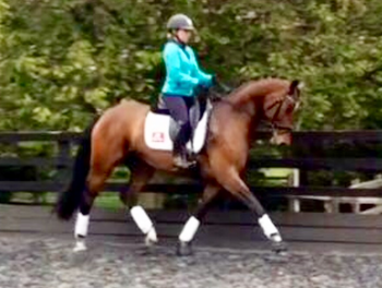 GORGEOUS GENUINE MARE NOT TO BE MISSED!