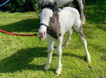 Lightweight - For Adoption - South East Yorkshire