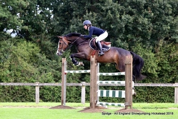All Rounder - Mare - Oxfordshire