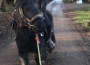 4 year-old - All Rounder - 12.2 hh - Norfolk
