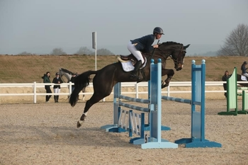 6 year-old - All Rounder - Mare - 16 hh - Oxfordshire