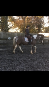 Calm safe riding school lessons