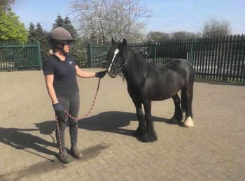 Pony - For Adoption - Mare - 12.1 hh