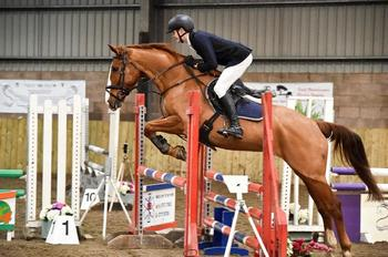 16.2hh Genuine All-Rounder