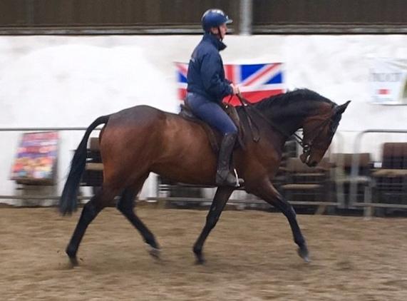 Top Class show horse