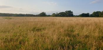Grass livery - Horne, Surrey