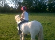 11 year-old - All Rounder - 12.1 hh - Norfolk