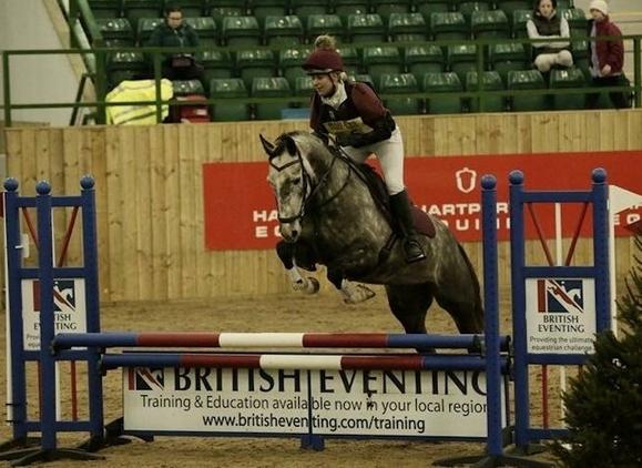 IRISH SPORTS HORSE-DAPPLE GREY-MARE-15.2HH-6YRS