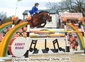 KWPN Bay Mare, 11 years old, Perfect horse!