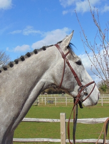 4 year-old - All Rounder - Gelding - Oxfordshire