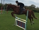 CLEVER, TALENTED EVENTER for sale
