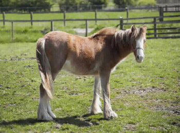Lightweight - For Adoption - 12.2 hh - South East Yorkshire