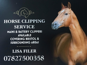 horse clipping services