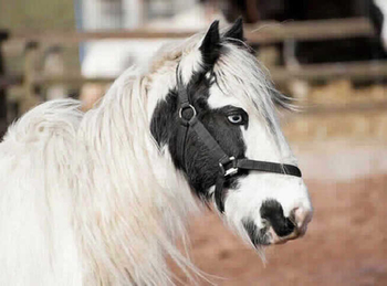 Middleweight - For Adoption - 13.2 hh - South East Yorkshire