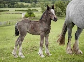 Lightweight - For Adoption - 12.2 hh - Durham