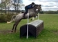 BELLE IS A SHOWJUMP / EVENT PROSPECT for sale