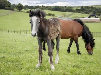 Pony - For Adoption - 11.2 hh - Durham