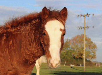 Lightweight - For Adoption - Mare - South East Yorkshire