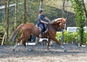 GOOD NATURED, FUN ALL ROUNDER for sale