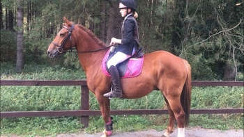 8 year-old - All Rounder - 14.3 hh - Norfolk