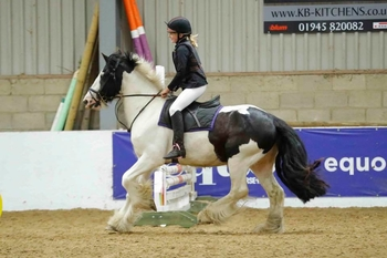 irish cob - Cobs - Gelding - 15 hh - Norfolk