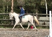 All Rounder - 16.2 hh - Norfolk