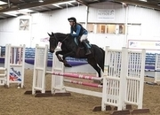 5 year-old - All Rounder - Mare - 15.2 hh - Norfolk