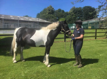 Lightweight - For Adoption - Mare - 13.2 hh