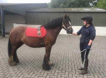 Pony - For Adoption - 13.2 hh
