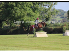 IDEAL LADIES HUNTER-16hh Bay Mare by 'No Limit'