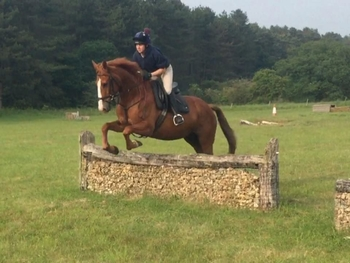 6 year-old - All Rounder - Mare - 16.2 hh - Norfolk