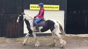 4 year-old - Cobs - Mare - 15.1 hh - Norfolk