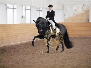 FEI Grand Prix dressage stallion