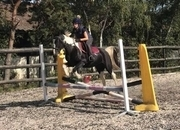 5 year-old - Cobs - Mare - 14.2 hh - Norfolk