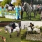 14.1HH CONNEMARA BY LEÁG GREAT COMPEITION AND HUNTING PONY