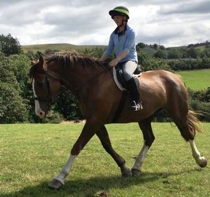 11 year-old - Irish Draught - All Rounder - Mare - Powys