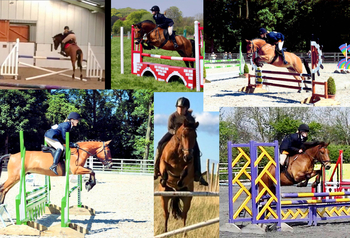 14.1HH New Forest PC pony for sale