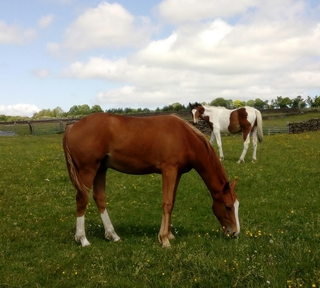 Really classy yearling gelding