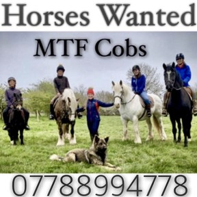 MTF COBS ... horses wanted