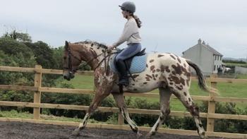 Pot Top Class Performance Horse