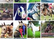 Cavallo Irish Sales - Quality Irish Horses