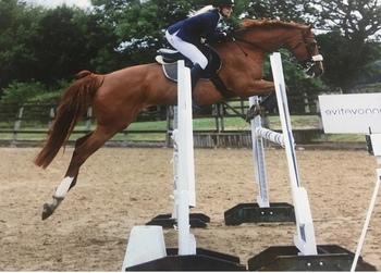 16hh Irish Sport Horse Showjumper