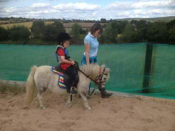 2 shetland ponies