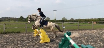 Casper 13.3h 8 year old gelding