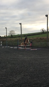 WANTED 14.2-16hh share/part loan