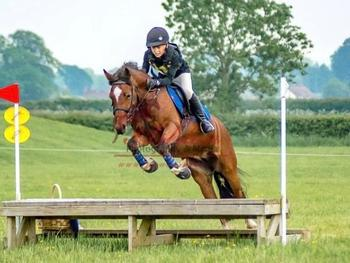 13.2hh, Super Competitive Mare, Welsh X .